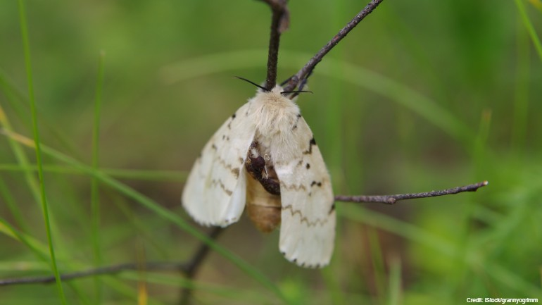 Gypsy moth treatment plan to begin in May to prevent mating in 14 Wisconsin counties