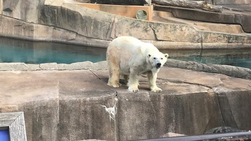 Catch A New View At The Zoo This Weekend
