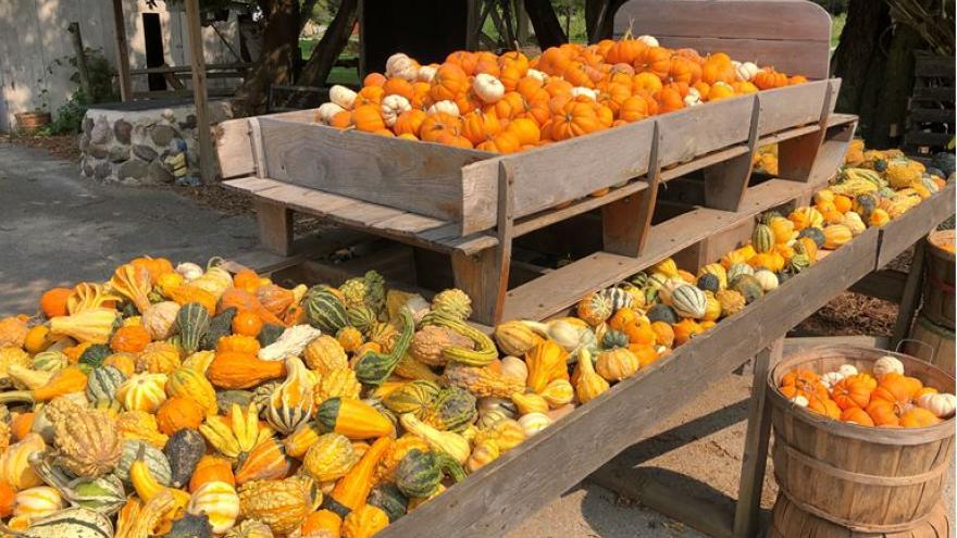 List: Milwaukee-area pumpkin farms open this weekend ...