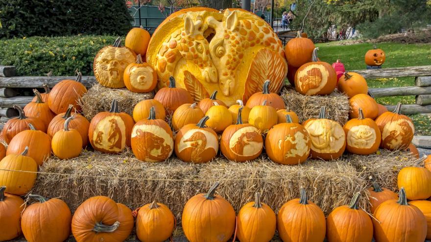 Milwaukee Zoo Halloween Spooktacular 2020 Milwaukee County Zoo's Spooktacular set for October 19, 20