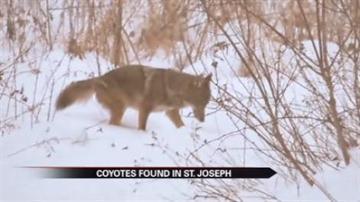 st joseph animal control
