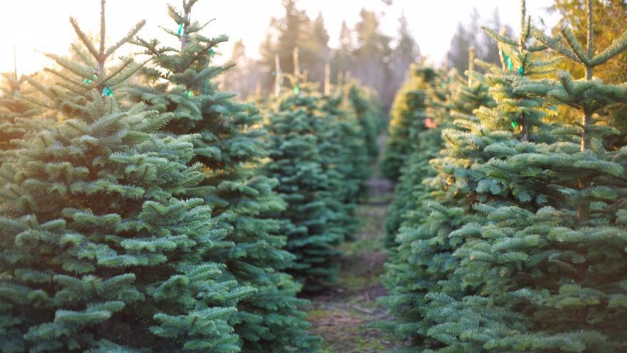 Lambeau Field Christmas Festival 2020 Packers seek tree for annual Festival of Lights event at Lambeau Field